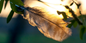 plumes ange signification couleur